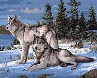 Картина по номерам Зимние волки, 40х50 см., Rainbow Art