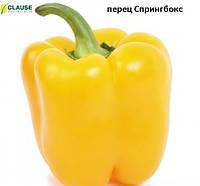 Перец СПРИНГБОКС F1 (500 сем) CLAUSE, фото 1