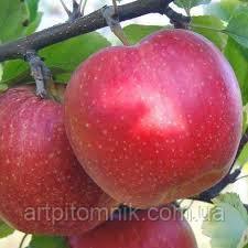Яблуня Фукутами