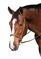 Классическая кожаная уздечка для лошади