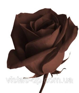 Барвник Шоколадно - коричневий