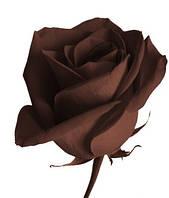 Краситель Шоколадно - коричневый