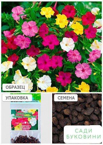 Мірабіліс 'Нічна красуня' (Зипер) ТМ 'Весна' 1.5 м