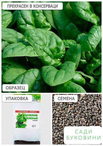Базилік 'Зелений' (Зипер) ТМ 'Весна' 1,5 м