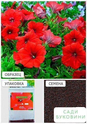 Петунія 'Червоний' (Зипер) ТМ 'Весна' 1г