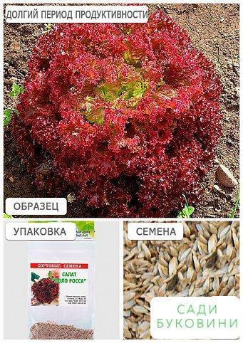 Салат 'Лоло роса' (Зипер) ТМ 'Весна' 1г