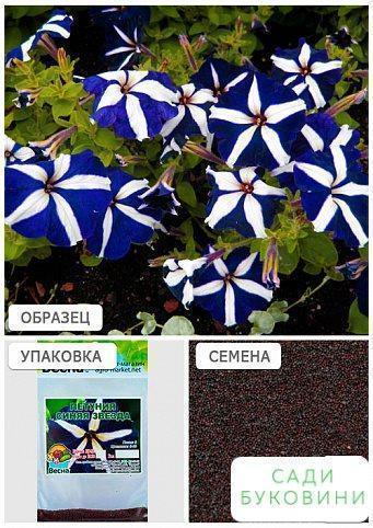 Петунія 'Синя зірка' (Зипер) ТМ 'Весна' 1г