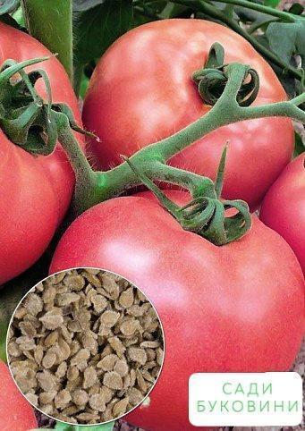 На вагу Томат 'Рожеві щічки' ТМ 'Весна' ціна за 2г