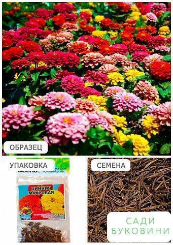 Цинія 'Махрова' (Зипер) ТМ 'Весна' 2г