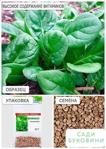 Шпинат (Зипер) ТМ 'Весна' 8г