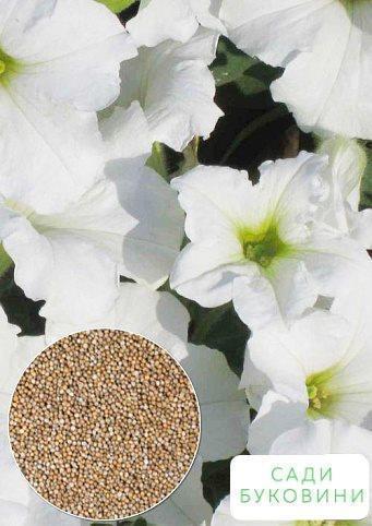 На вагу Петунія 'Крупноквіткова біла' ТМ 'Весна' ціна за 2г