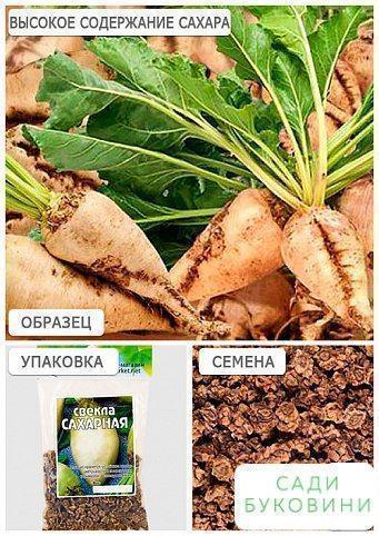 Буряк 'Цукрова' (Зипер) ТМ 'Весна' 10г