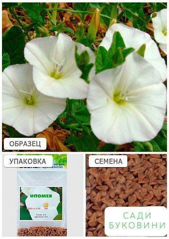 Іпомея біла (Зипер) ТМ 'Весна' 1г