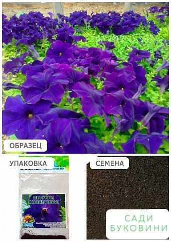 Петунія 'Фіолетовий' (Зипер) ТМ 'Весна' 1г
