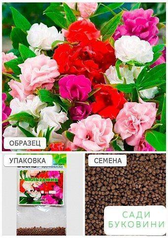 Бальзамін суміш (Зипер) ТМ 'Весна' 1г