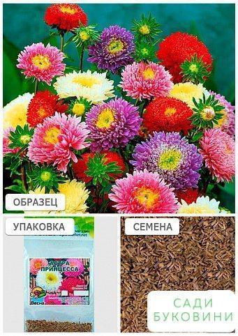 Астра 'Принцеса' суміш забарвлень (Зипер) ТМ 'Весна' 1г