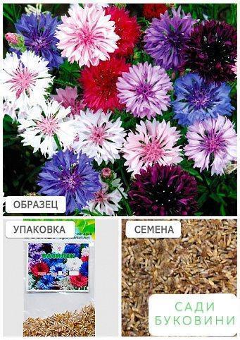 Волошка (Зипер) ТМ 'Весна' 1г