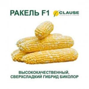РАКЕЛЬ F1 / RAKEL F1 семена сладкой кукурузы, 5 г — суперсладкая, биколор, Clause