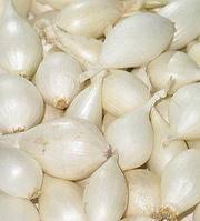 Лук Севок белый (1 кг)