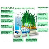 Луковое счастье - вазон для выращивания лука, фото 2