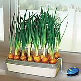 Луковое счастье - вазон для выращивания лука, фото 5