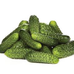 Лист F1 насіння огірка, 50 насінин — партенокарпічний, ранній, Rijk Zwaan