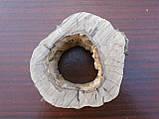 Слэб ореха, фото 4