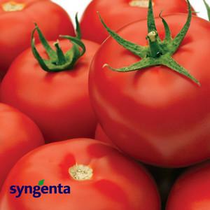 Семена томата Гравитет F1, 10 сем — ранний (63-68 дн), красный, полудетерминантный, круглый, Syngenta