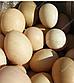 Инкубационное яйцо бройлера  РОСС 308 (Украина), фото 2