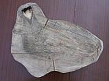 Слэб ореха, фото 2