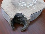 Слэб ореха, фото 3