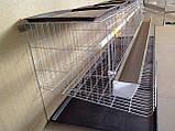 Клетка для несушек. ЭКО-20, фото 5