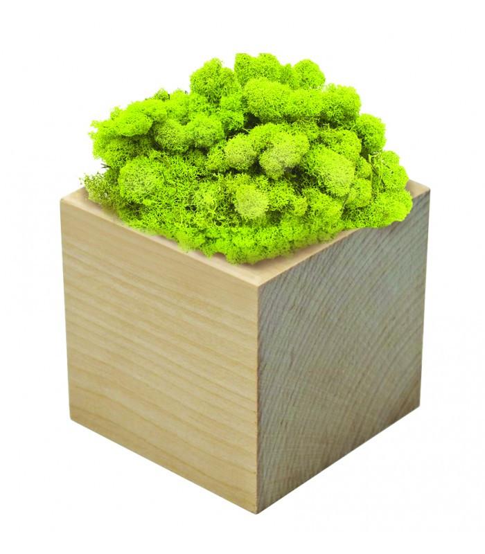 Экокуб стабилизированный мох