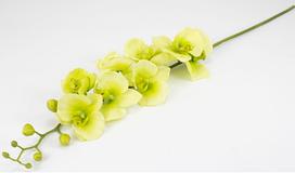 Квітка Орхідея 90см силікон 034F/green (зелена)