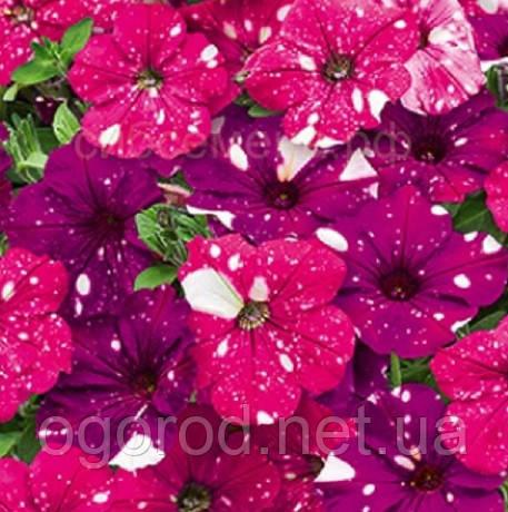 Петунія Зоряне Небо(Dot Star F1) 500 шт Cerny Чехія Dark Violet