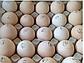 Яйцо бройлера КОББ 500 (Чехия) для инкубации, фото 3