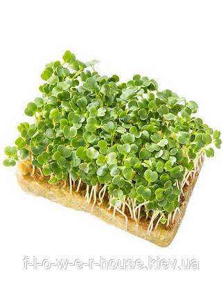 Семена микрозелени рукколы 10 г, фото 2