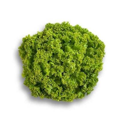 Семена салата Алеппо, 15 шт — светло-зелёный, тип Лолло Бионда, Rijk Zwaan, фото 2