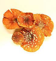 Мухомор червоний (Мухомор красный) Amanita muscaria шляпки 100 грам