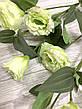 Искусственная эустома салатовая ( премиум , имитация натурального растения), фото 3