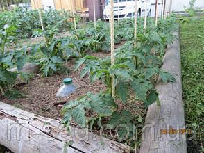 Опора для подвязки растений из композита, диаметр 6 мм, высота 30 см, фото 3