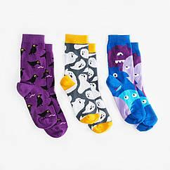 Детские носки Dodo Socks Babaiko 2-3 года, набор 3 пары