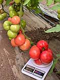 Макан F1 семена томата среднерослого розового Clause Франция 250 шт, фото 3