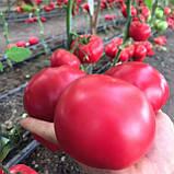 Макан F1 семена томата среднерослого розового Clause Франция 250 шт, фото 4