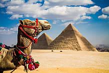 Ну очень приемлемые цены и море позитива – туры в феврале в Египет. Дешевле уже не будет!