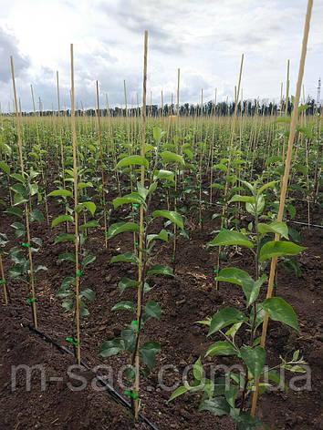 Опора для подвязки растений из композита, Ø 8 мм, высота 75 см, фото 2
