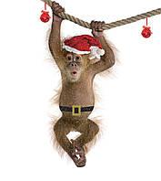 Аренда обезьянки, обезьяна, мартышка