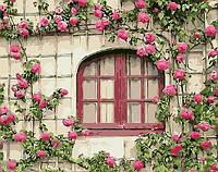 Картина рисование по номерам Brushme Розовые цветы 40х50см рисование роспись по номерам, кисти, краски, холст