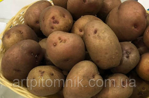 Картофель Грация (по 5 кг)