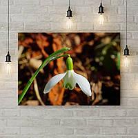 Картина на холсте на стену для интерьера дома Весенний подснежник, 50х35 см